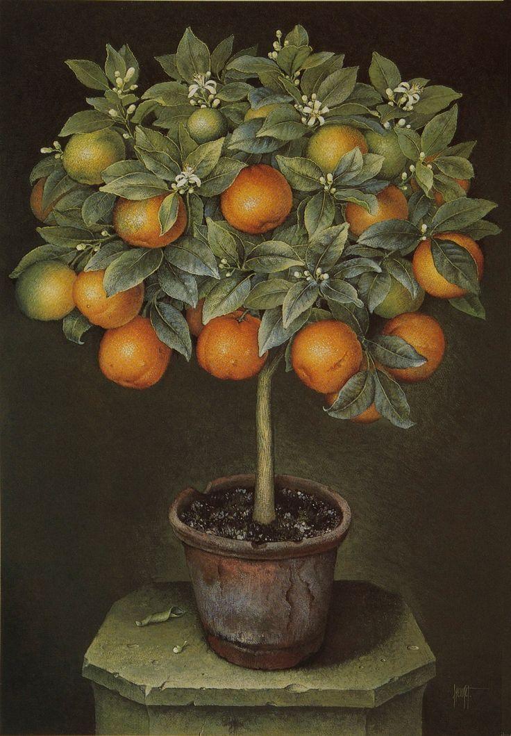Orange Tree in Blossoms in Terracota Pot (José Escofet)