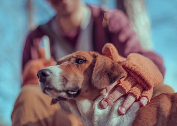 Image result for What to consider before bringing a pet into your home