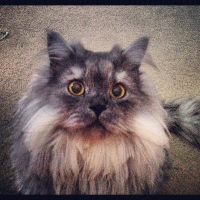 Crazy Cat Pictures