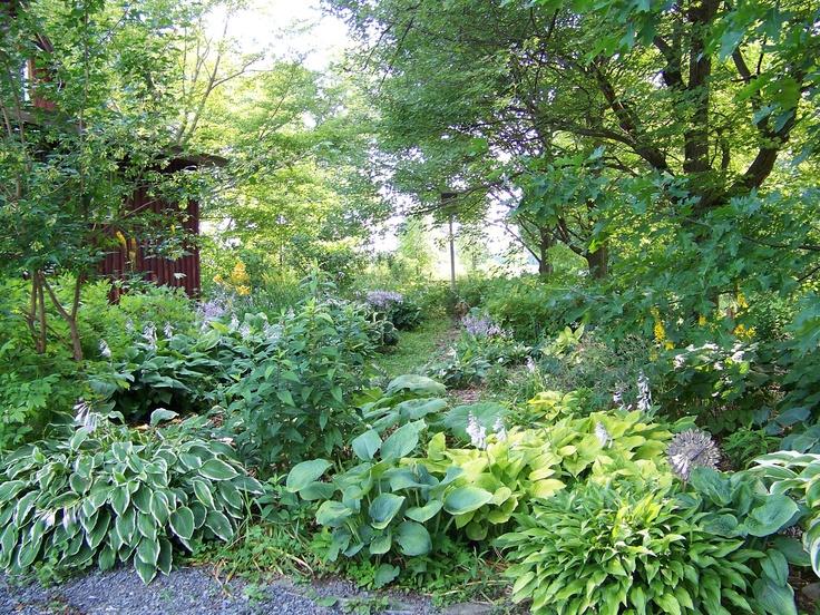 Hosta shade garden: Gardens Ideas, Gardens Inspiration, 7B Gardens, Hosta Shades, Gardens Desires, Gardens Delight, Hosta Gardens, Artists Gardens, Shades Gardens