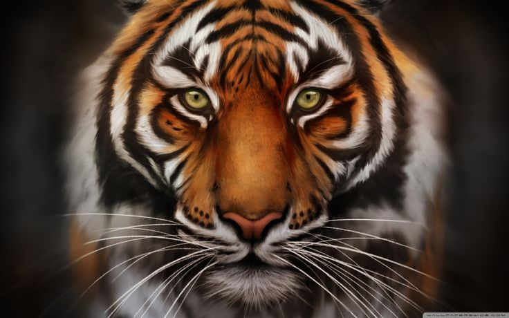Tiger Wallpaper Hd And Desktop Background In Px Resolution Id