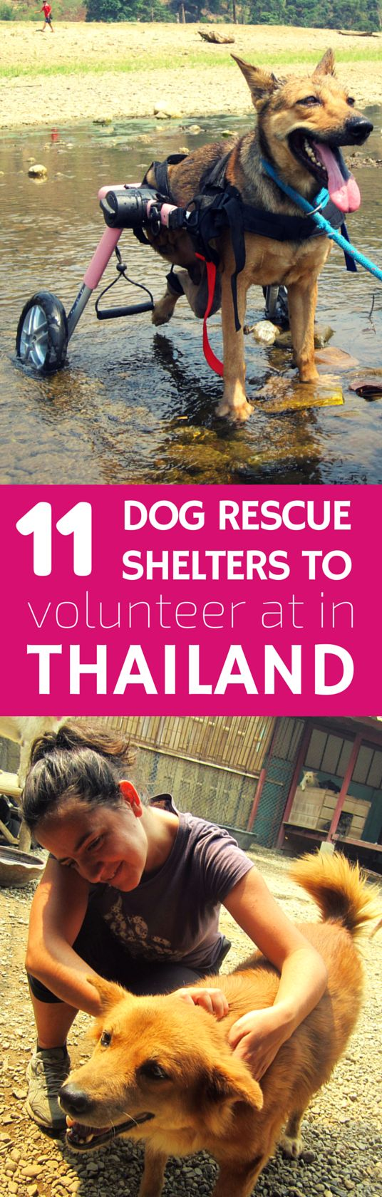 Want to volunteer in Thailand? Then help rescue dogs from the street and meat trade by volunteering at one of 11 volunteer-friendly dog shelters in Thailand