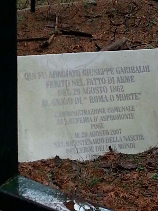 Aspromonte, Reggio Calabria, Italia, albero di Garibaldi