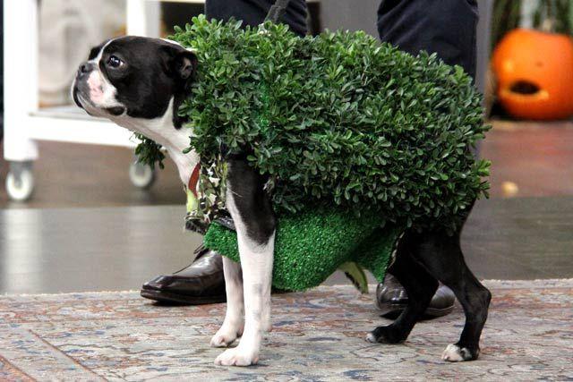 Ch-ch-ch-Chia Pet DIY