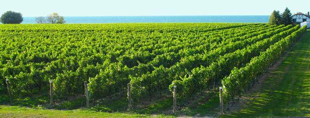 Take a wine tour, like here at Konzelmann