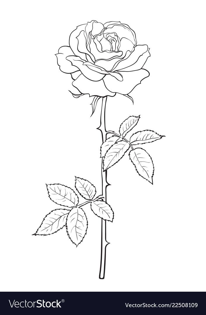 Black And White Rose Flower With Leaves And Stem Decorative Element For Tattoo Greeting Card Wedding In 2020 White Rose Tattoos White Rose Flower Rose Flower Sketch