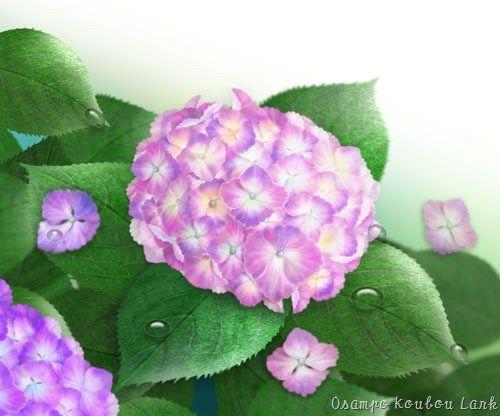 アジサイ2 – PC Flower Art *おさんぽ工房