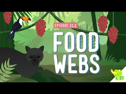 Food Webs: Crash Course Kids #21.2 by thecrashcourse: Last time we put a Polar Bear in the desert and we still feel bad about that, but there's a lot more going on in ecosystems than just temperature. In fact, there are so many elements in ecosystems, that if just one leaves or gets out of whack, it can be terrible for the whole thing. But today, let's talk about Spider Monkeys. Support The Crash Course on Patreon