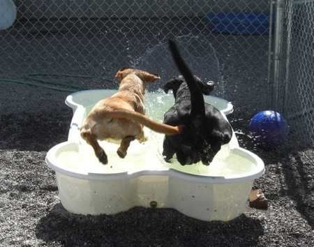 Bone-Shaped Dog Swimming Pool Keeps Canines Cool « Luxury Housing Trends
