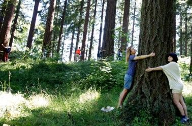 La sylvothérapie : de l'intérêt d'enlacer les arbres