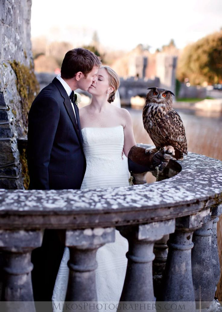 Weddings at Ashford Castle are likely to have some feathered guests from the School of Falconry... #Ashford #Ireland #wedding #romance #falconry #photos #bride #engaged