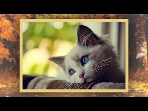 Грустная песня о кошке ко всемирному дню кошек - 1 марта!