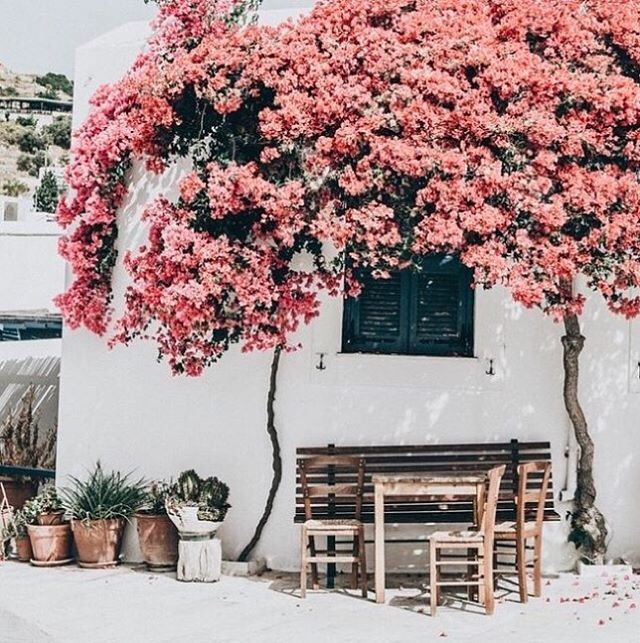 Greece expectations 🙌🏼 Image source unknown | Steph  #travel #Greece #Europe #flowers #pink #inspiration #instagood #inspire #style #interior #interiors #interiordesign #design #interiorstyling #holiday #vaccation #honeymoon #love #location #thestylephiles #doubletap #instagramers #sweet #beauty #explore #experience
