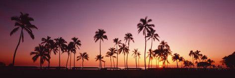 Sunset Palm Trees Oahu Island Hi USA Photographic Print