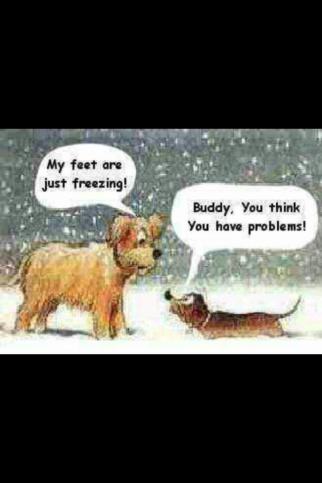Cold dog humor
