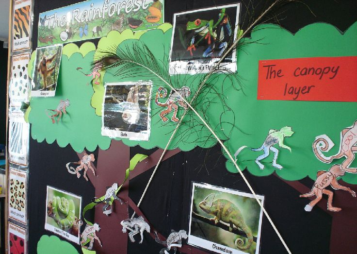 The Rainforest classroom display photo - Photo gallery - SparkleBox