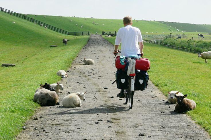 Op de LF10, Fietsen tussen de schapen, we liggen op zo'n 2 km vanaf de route maar voor veel fietsers vanuit Duitsland zijn we een welkome plijsterplaats. - foto Wilmet van Dijk