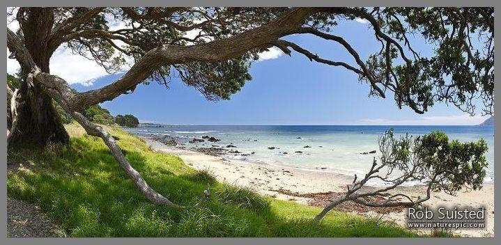 Waihau Bay through the limbs of an old Pohutukawa tree on a warm summers day. Panorama with lush grass and white sand beach.  Waihau Bay.