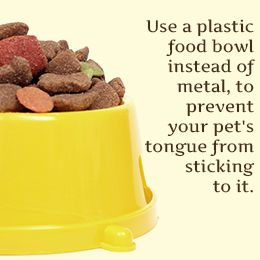 Use a plastic food bowl instead of metal so your dog's tongue won't stick to it!