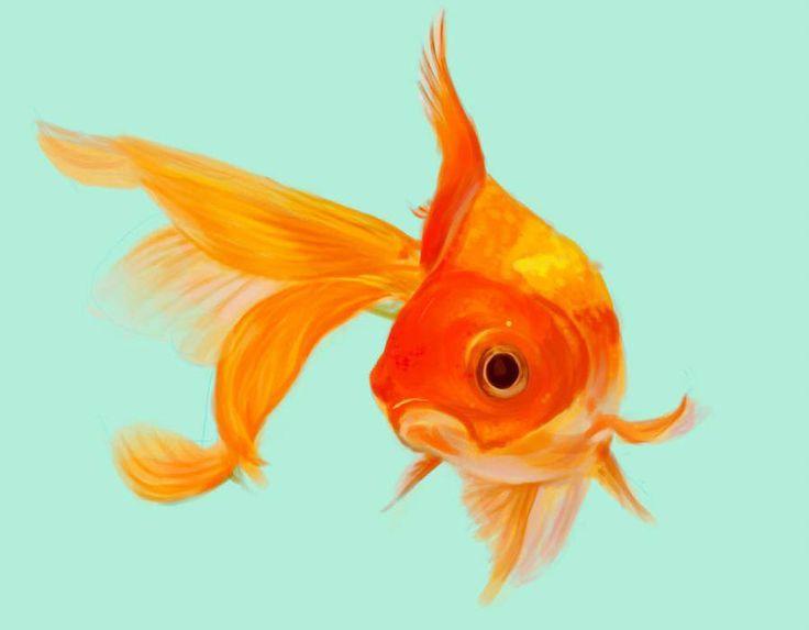 Pescado Por Simplicy Pescado Por Simplicy Ilustracion De Peces Pez Dorado Peces De Colores