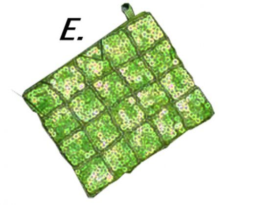 Gyöngyös himzett pénz- és irattartó ( E) zöld