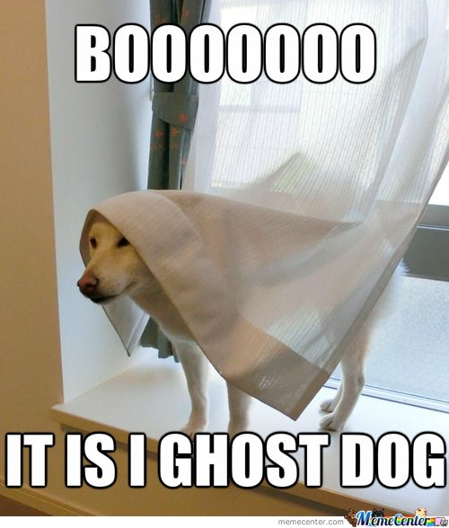 5f9a77fda2cb0d9825a58bf159641d04 the bride adorable animals 35 best ghost memes images on pinterest funny images, funny