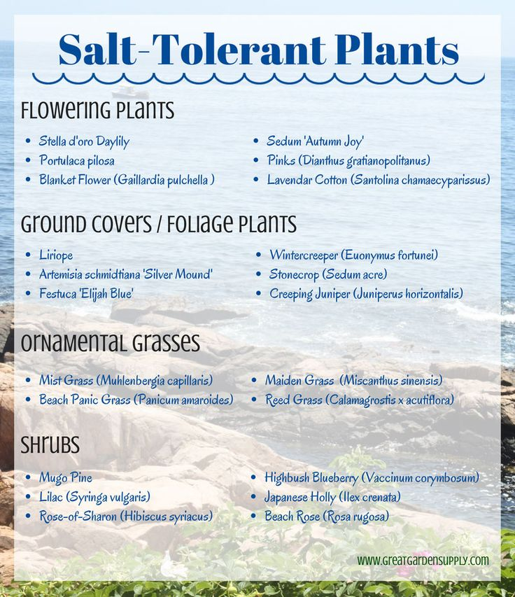 A list of salt-tolerant plants for coastal or seaside gardens.