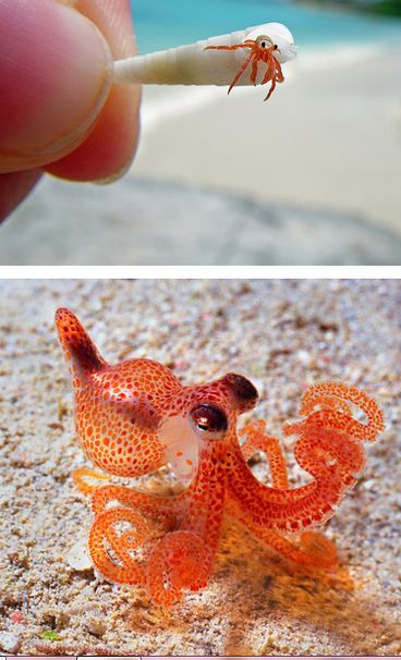 tiny creatures <3