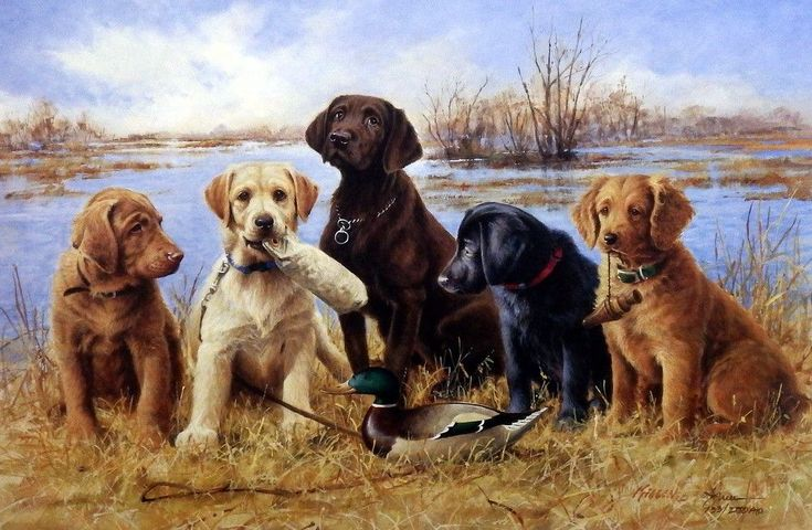 Another great hunting dog print for sale--James Killen DUCK DAZE. Five adorable puppies in training--a yellow, black and chocolate lab; a Chesapeake; a Golden Retriever.