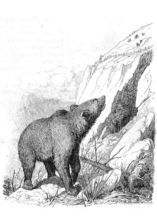118 besten bear Bilder auf Pinterest   Bären, Basteln mit kindern ...