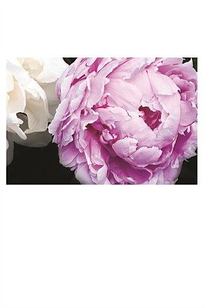 Photographed botanic prints by Anna Killgour-Wilson.   Roses, Peonies, Poppies and Camellias, and Magnolias are Anna's inspiration for this modern romantic range of floral canvases. Her short editions guarantee uniqueness.