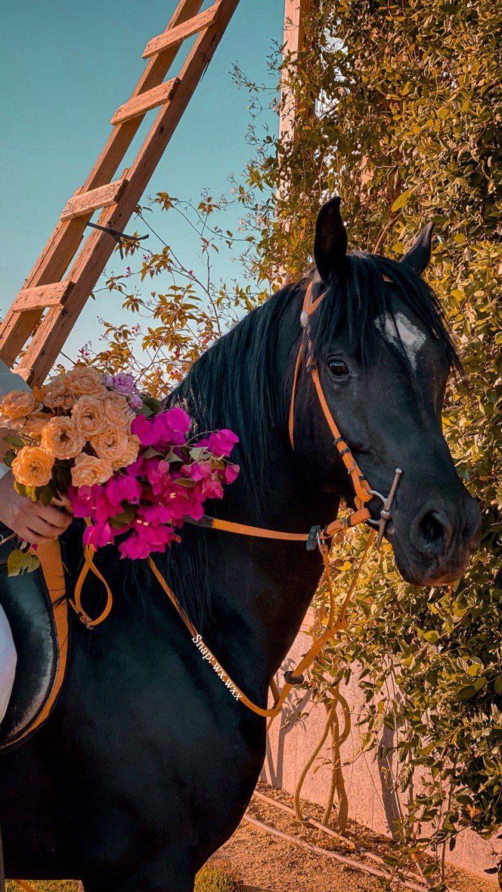خيل و أدب On Twitter Horses Modern Painting Phone Wallpaper