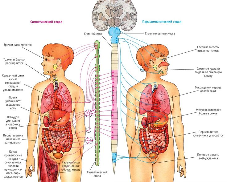 The 7 Best Images On Pinterest Anatomy Ap Biology