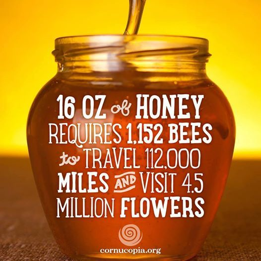 Bees Are More Crucial to Modern Agriculture Than Fertilizer. Learn more: http://www.cornucopia.org/2014/06/bees-crucial-modern-agriculture-fertilizer