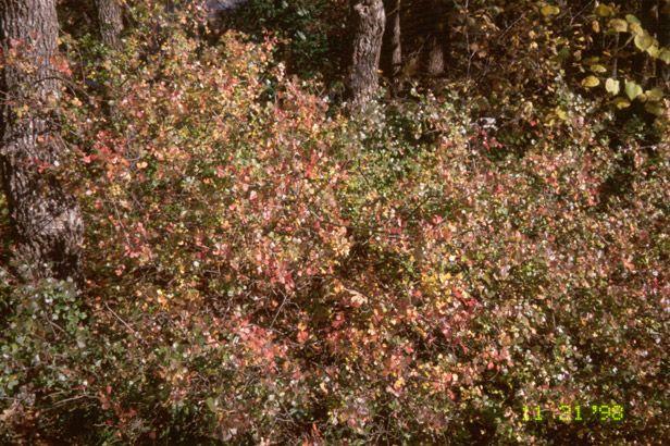 29 best texas native plants images on pinterest