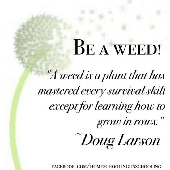 Be a weed. A weed is a plant that has mastered every survival skill except for learning how to grow in rows.