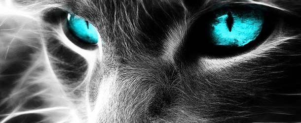 Gatos Negros, ¿mascotas del diablo? | Paranormal, extraterrestres, esoterico, ovni, ouija
