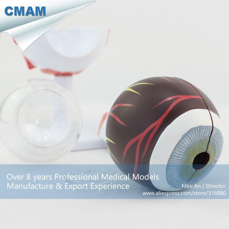 CMAM-EYE02 Large 3x Life Size 6 Parts Human Eyeball Anatomy Study Model,  Medical Science Educational Teaching Anatomical Models