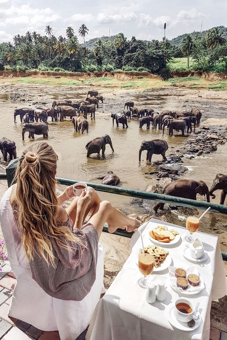 Breakfast with elephants in Sri Lanka: http://www.ohhcouture.com/2017/02/sri-lanka-travelguide/ #ohhcouture #leoniehanne