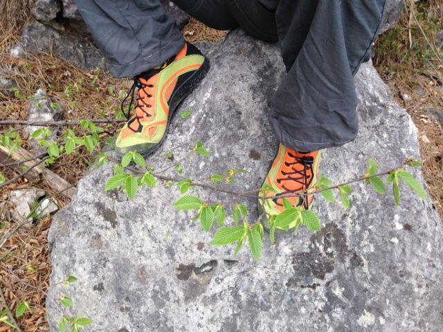 Lizard Kross Terra II.  Foto di Ginevra
