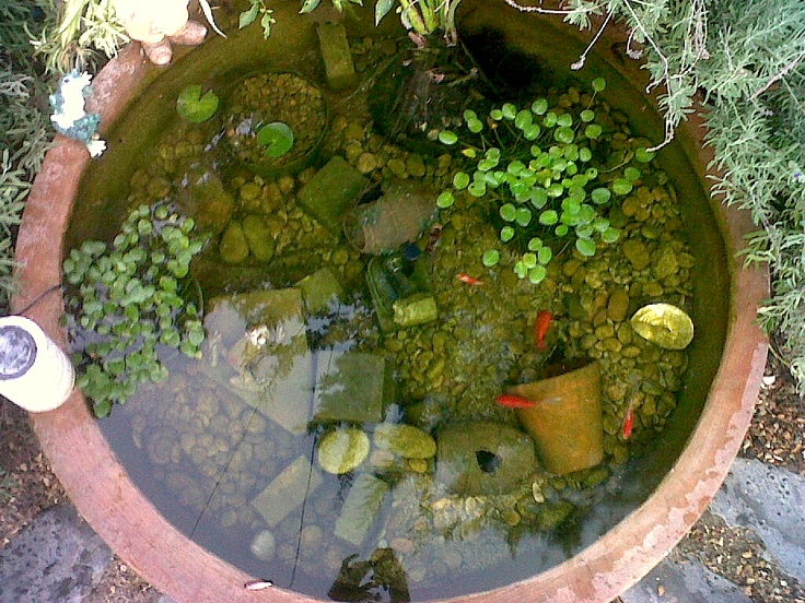 This is my #pond. We have five #goldfish; Lucky, Finny, Fatty, Stripey and Thingy.    We bought the pond itself from an outdoor pots manufacturer. It did not need lining as it's not porous. if it is porous, a transparent plastic should be fine but covered with rocks and water plants so it doesn't overheat. if you do buy something like this for a pond, ie a 'base' for an outdoor pot that was not originally made TO be a pond, make sure with the seller that the structure isnt coated with…