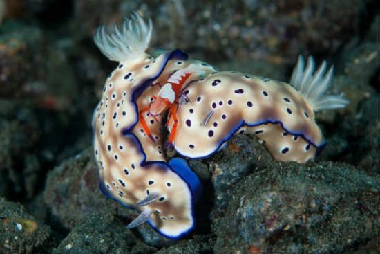 La vida acuática en 31 fotos
