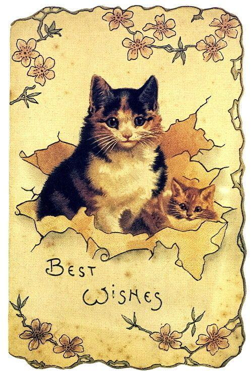 Cat-Kitten 1992 Postcard Unused