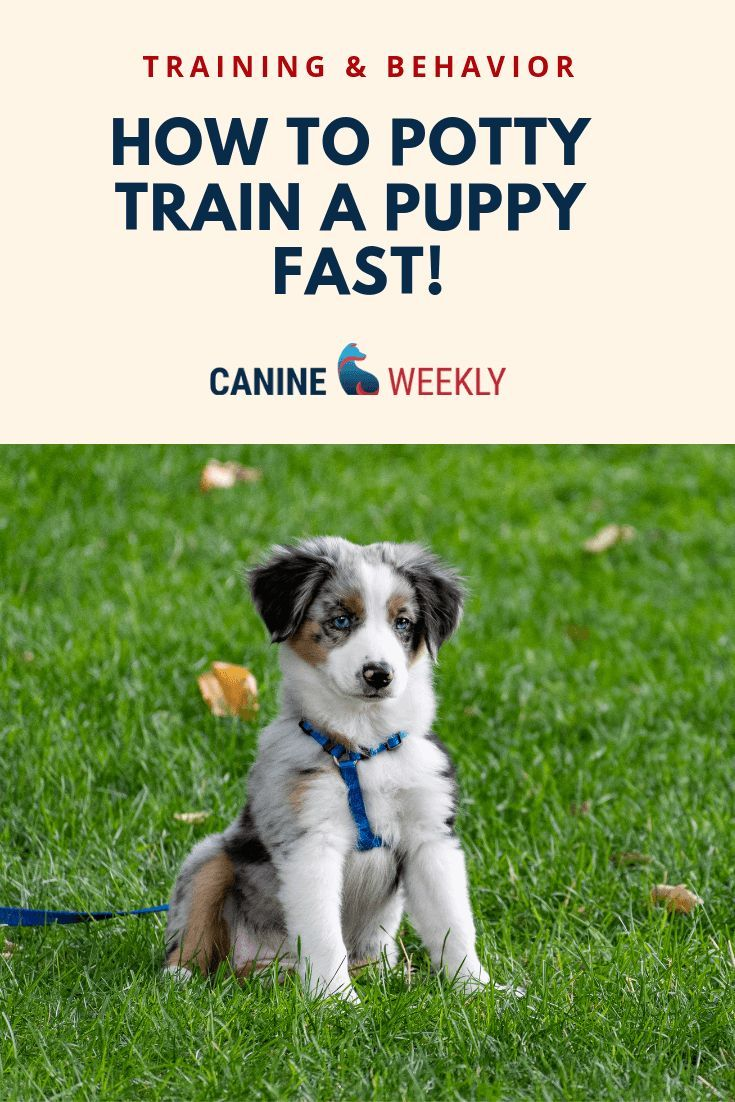 Learn How To Potty Train A Puppy Fast Easiest Dogs To Train