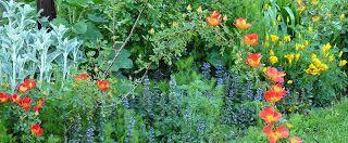 "Living Ravenna: ""Meraviglie segrete"": pedalata a Fusignano (RA) domenica 10 maggio 2015"