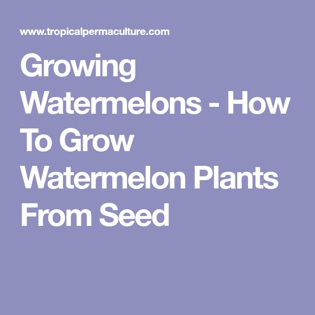 Growing Watermelons - How To Grow Watermelon Plants From Seed