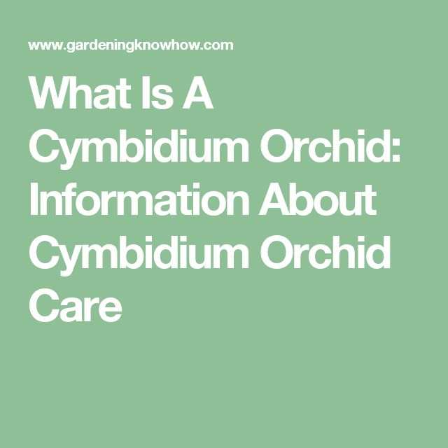 What Is A Cymbidium Orchid: Information About Cymbidium Orchid Care                                                                                                                                                                                 More
