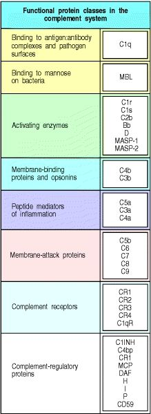Figure 2.9. Functional protein classes in the complement system.