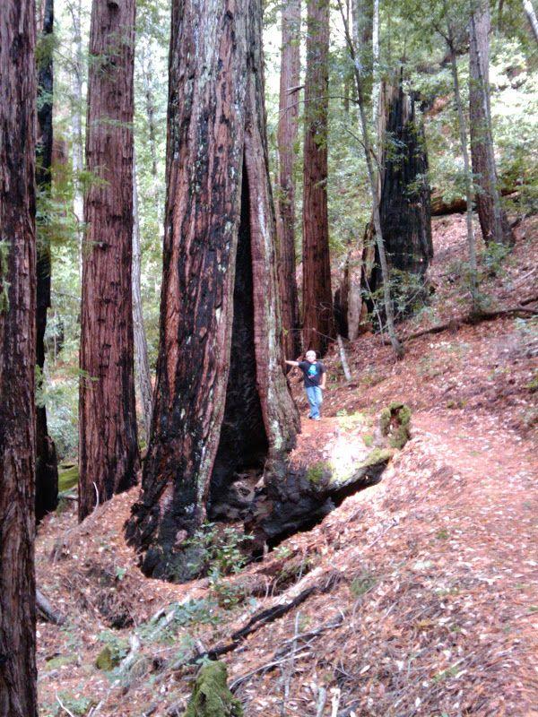 17 Best Images About California Los Gatos Saratoga On Pinterest Santa Cruz Parks
