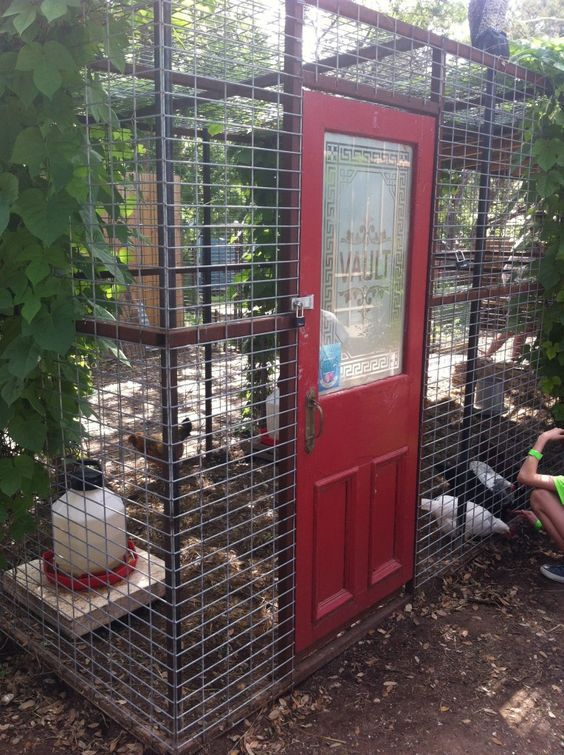 If you have plans to develop your own DIY chicken coops then rest assured that this is not a bad idea at all. The process is very easy and the biggest assistance for you is… More